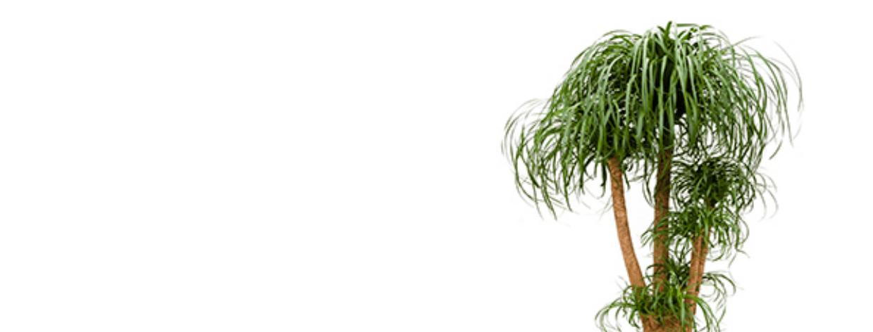 Der smarte Pflanzenwächter integriert in die Hausautomation
